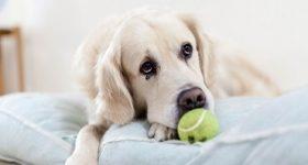 night-ball-tennis-eyes-75346